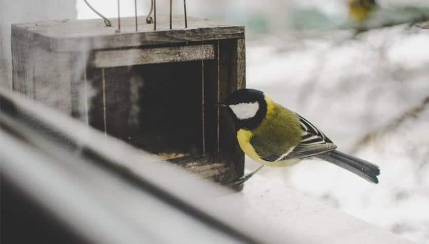 Vogelschutzglas Vogelschlag Gegen Fenster Vermeiden